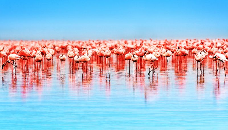 Don't be late for the Flamingo party