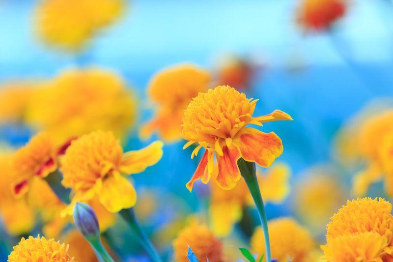 Yellow Focus