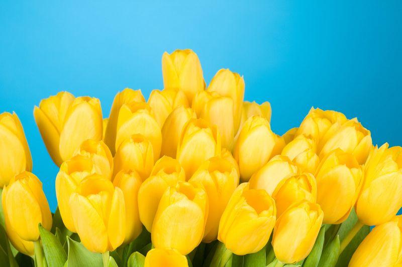 Fresh Yellow Tulips for Mum