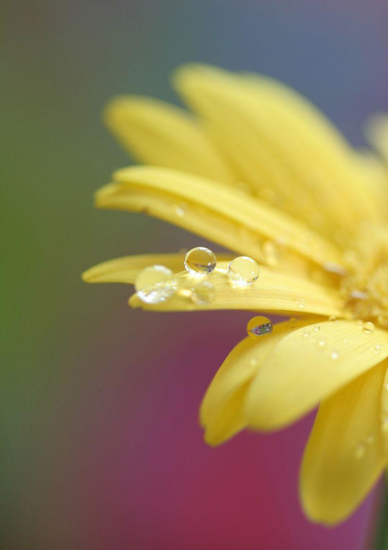 Rejuvinating Fresh Dew