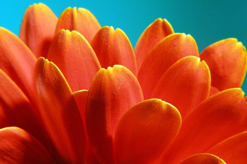 Energetic Petals
