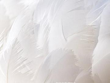 Pristine Whites
